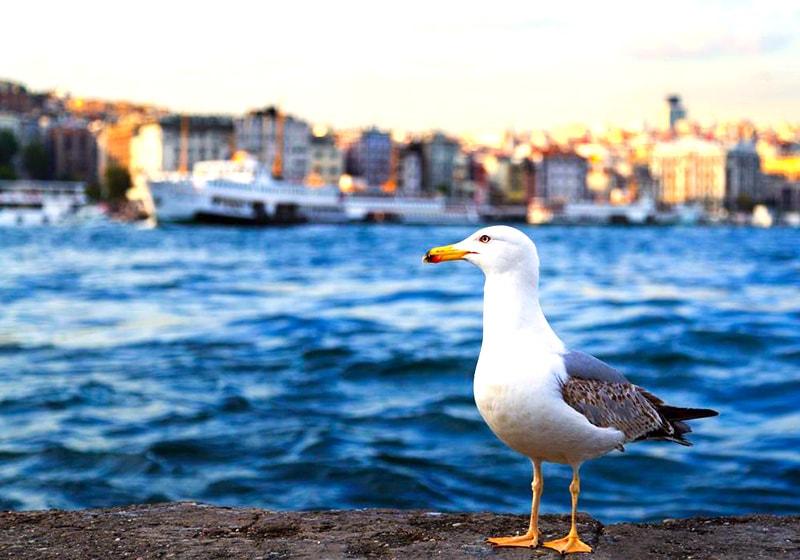 Босфор, Стамбул